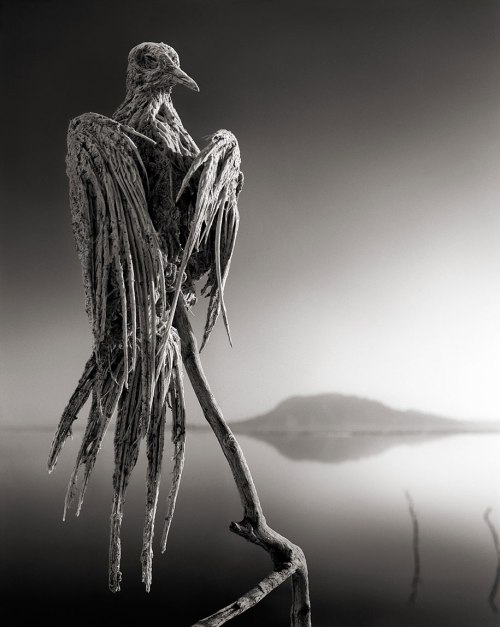preserved-birds-lake-natron-nick-brandt-2
